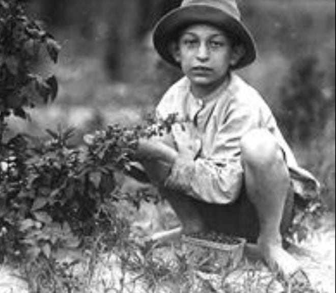 BERRY PICKING- This boy may not have been any older than Henry Hart, who at age six in 1860 went missing when he was picking berries between his home at Olyphant, Pa. and what is today Moosic Lake. The photo shows Norris Luvitt picking berries near Baltimore, June 8, 1909. /Photo credit: U.S. National Archives & Records Administration