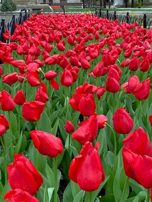 These are among the many flowers people can enjoy in Copley Square.