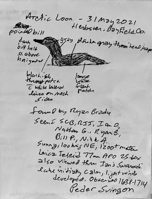 Notes and a sketch by Peder Svingon of the Memorial Day sighting of an Arctic loon offshore of Herbster, Wis. in Lake Superior. It was the first documented sighting of the species in state history.