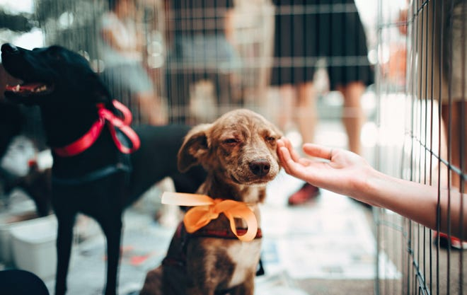 RE/MAX Consultants Palm Desert, along with Animal Samaritans, will be hosting a pet adoption on Saturday, June 12, 2021.