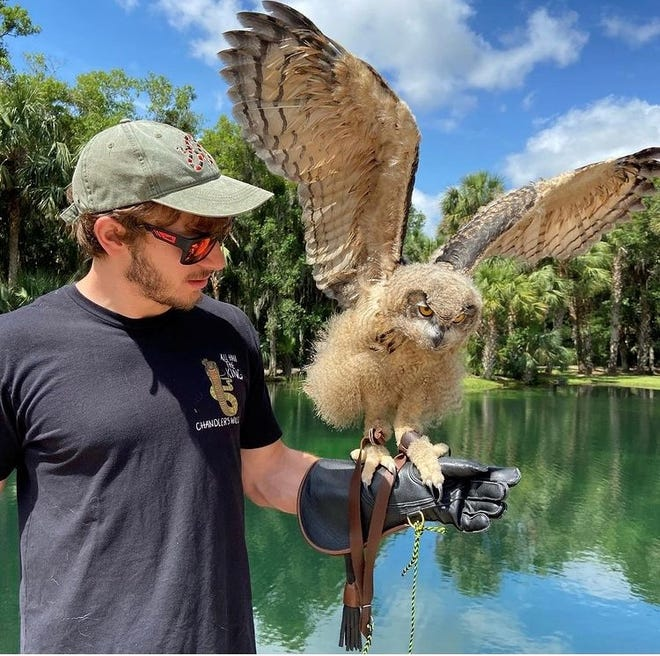 A Eurasian Eagle Owl, named Bagoly, sits on Chandler Kamenesh's wrist at his wildlife conservation on McCarty road.
