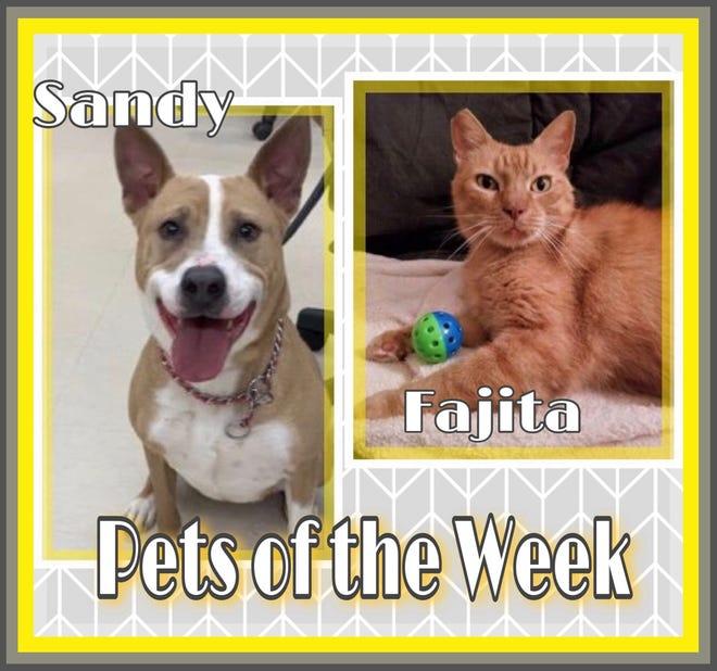 Pets of the Week: Fajita & Sandy