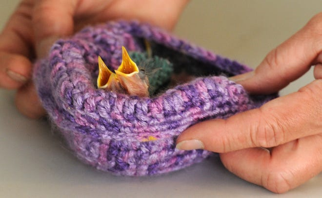 EASTHAM -- A couple of baby birds sit in a knitted nest at Wild Care Cape Cod in 2015.