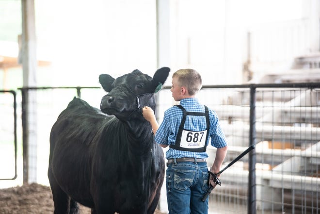 Boy with black cow