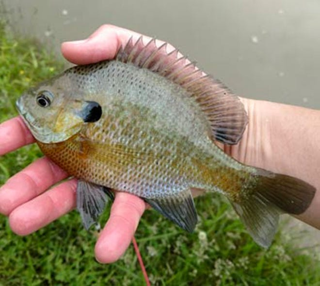 Indiana will be hosting free fishing days in June and September. The DNR also has free videos and fishing tips on its website. (DNR courtesy photo)