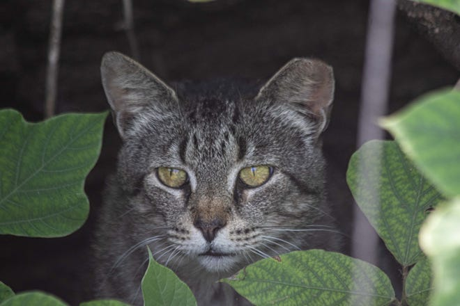 A colony of feral cats must find homes by the end of the summer.