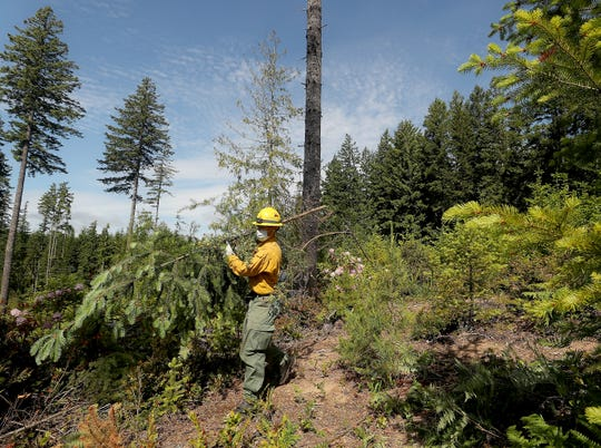 Firefighter Chase Boatler carries a small tree to a brush pile as his team clears the undergrowth of an MNR plot of land off Tahuyeh Lake Road on Thursday.