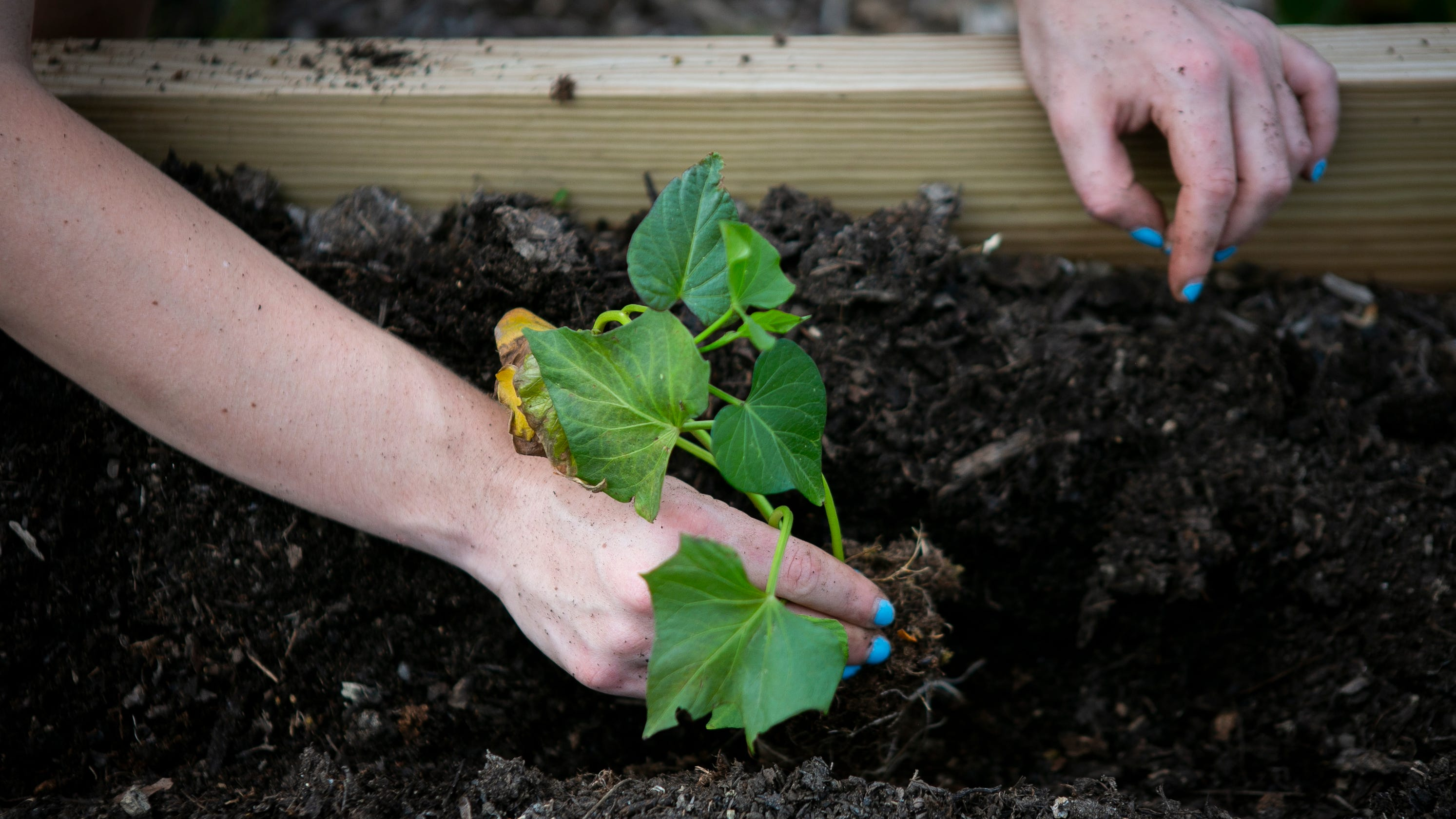 Starting a garden this summer? Here are some tips for Midwest beginners