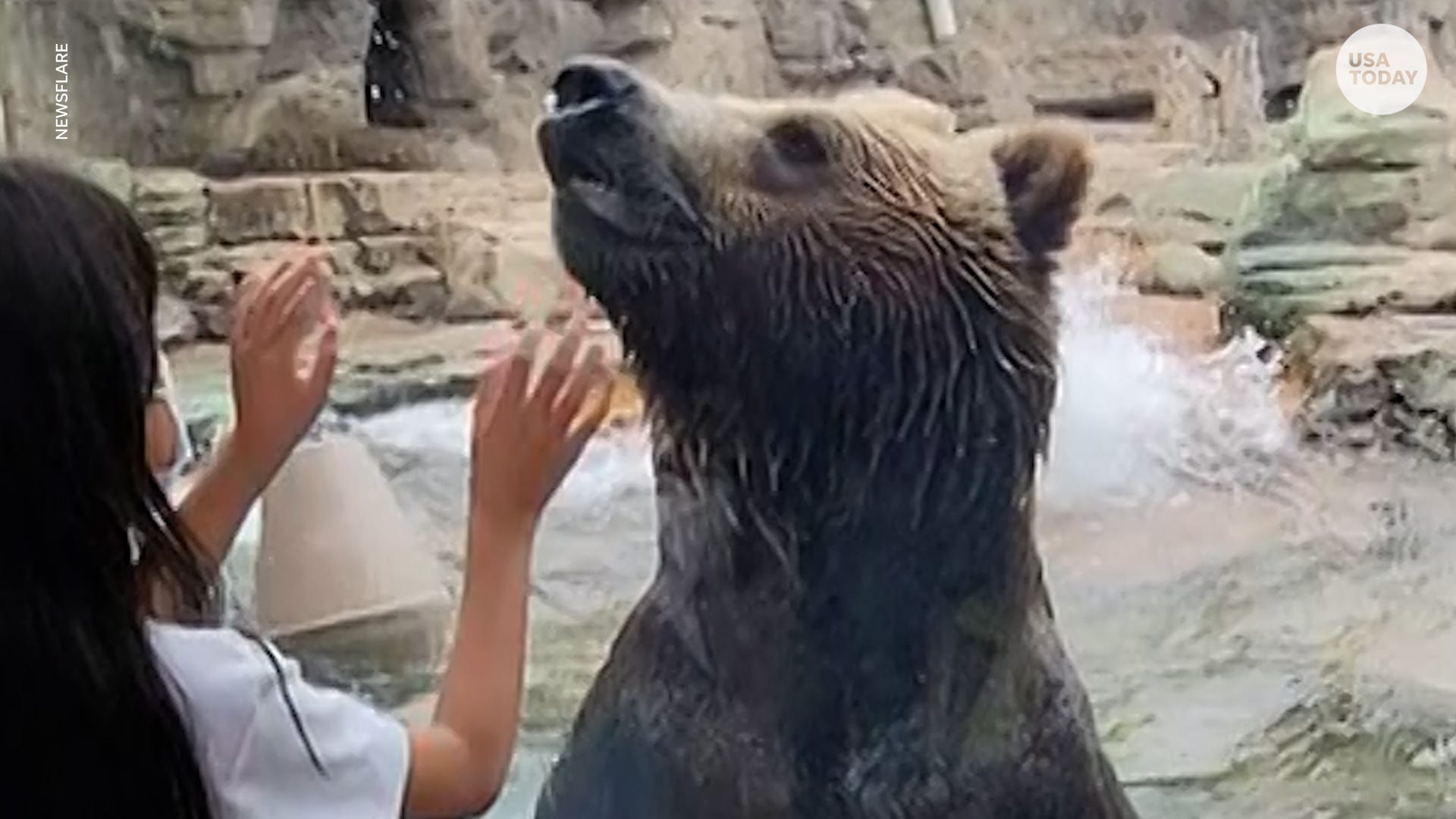 Grizzly bear can't hide excitement when kids visit