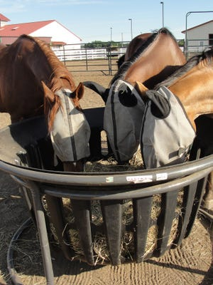 Proper nutrition is important for horses.