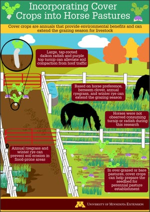 Cover crops provide nutrition for horses while at the same time offering environmental benefits.
