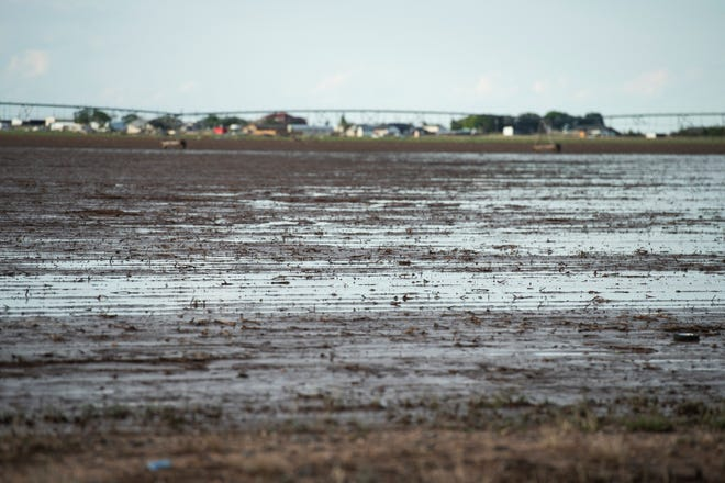 Water stands in a cotton field in Lubbock County after several days of rain on June 3, 2021.