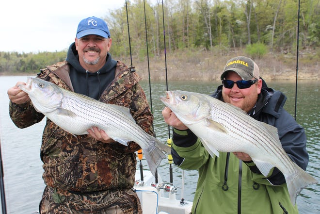 Stripers are fun to catch and good to eat.