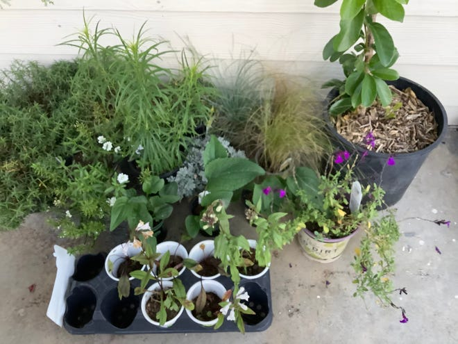 Plants are waiting to go into the ground until it is less soggy.