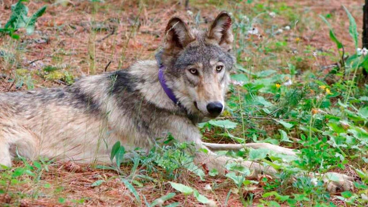 Biden admin targets Trump rollbacks of species protections 3
