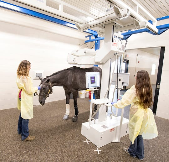 Veterinary nurses at the Caesars Entertainment Equine Specialty Hospital perform a scan on a patient using a nuclear scintigraphy machine. (Photo provided by Caesars Entertainment Equine  Specialty Hospital)