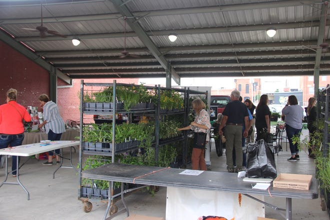 Shoppers at the Ardmore Downtown Farmers Market browse a selection of native varieties of flowering plants and milkweed that attract monarch butterflies and other pollinators.