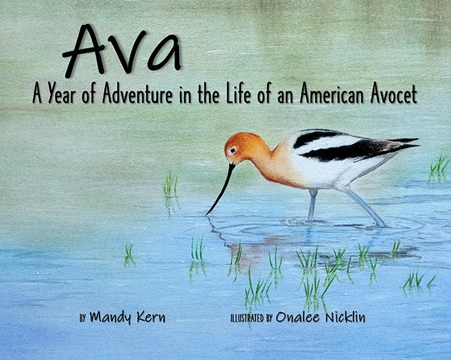 The Kansas Wetlands Education Center is debuting a 32-page fully illustrated children's book about an American Avocet, a species of shorebird. Cheyenne Bottoms and the importance of wetland habitats are featured throughout. Families can receive a free copy at the June book launch event.