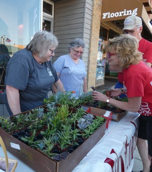 Sue Stander and Debbie Bennett, from left, help visitors select succulents at the Norton's Flowers booth during the Chamber's First Friday event.