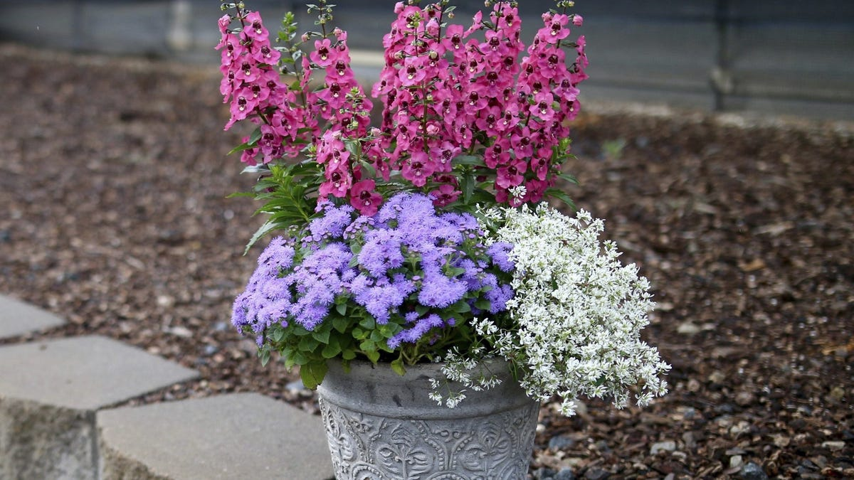 Gardening   Container gardens yield not only colorful flowers but veggies, too