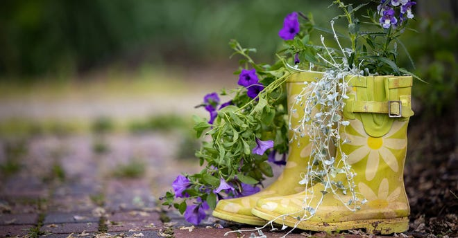 This old pair of rain boots makes an adorable planter that adds whimsy and visual interest to any garden.