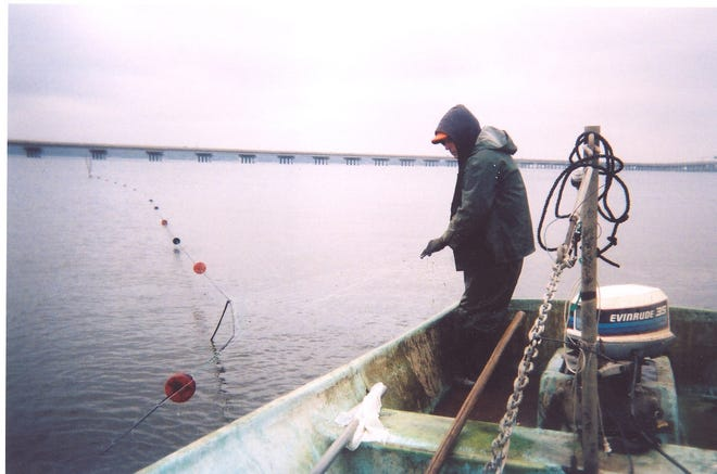 A fisherman checks his gill net in this file photo. A legislator would like to see N.C. voters decide on whether to ban most net fishing in the state's coastal waters.