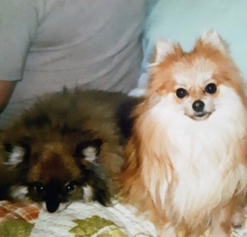 Bella and Harley were sitting in a running truck at Bedford Walmart Friday when a thief got in the vehicle and drove off. A Stinesville police officer located the stolen truck Saturday and the dogs were returned to owners Wayne and Marti Davis, Orleans, unharmed.