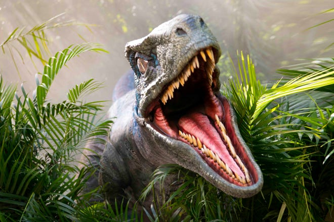 """The Raptor Encounter at Universal Orlando's Islands of Adventure puts visitors face to face with """"Blue,"""" the velociraptor from the """"Jurassic World"""" movie franchise."""