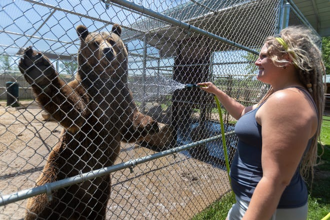 Katelyn Bowman sprays a grizzly bear named Rocky on Friday at Valley of the Kings in Sharon. Most of the wild animals at the nonprofit sanctuary come from government seizures during drug raids, zoo surplus and individuals calling and asking to take large cats off their hands.