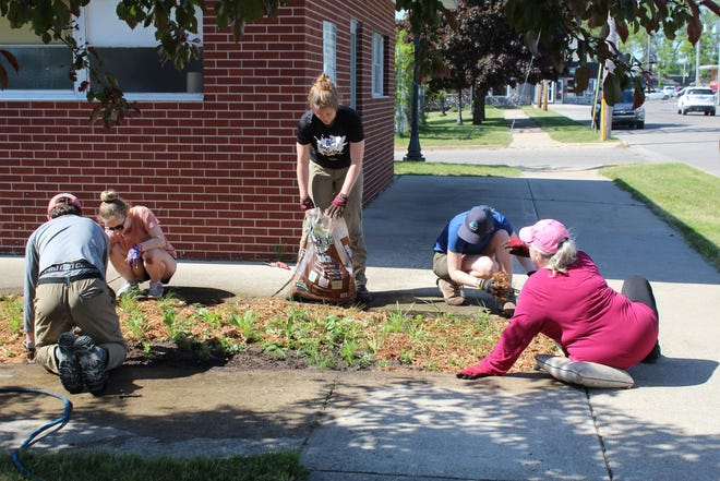 Volunteers and residents of the City of Cheboygan and representatives from the Tip of the Mitt Watershed Council worked together last Friday afternoon to plant a rain garden in the Water Street parking lot.