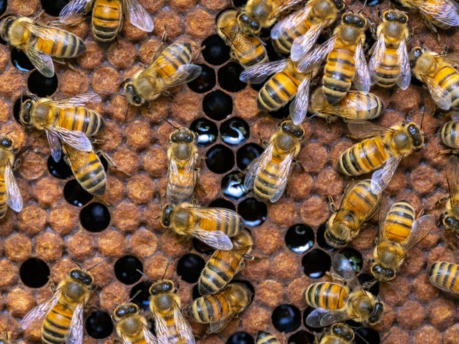 Beekeeping is a growing hobby in Oklahoma where there are few rules and restrictions on backyard hives.