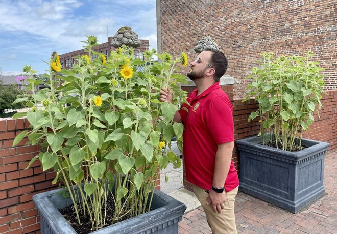 Guerrilla gardener David Crook admires the sunflowers he planted along Bollingbrook Street in Old Towne Petersburg blossoming on June 4, 2021.
