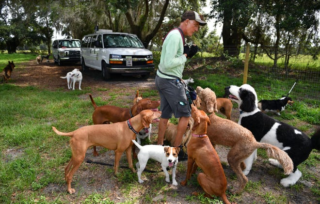 With treats in hand, dog trainer Jim LaClair has the undivided attention of a group of dogs at his property in Myakka City.