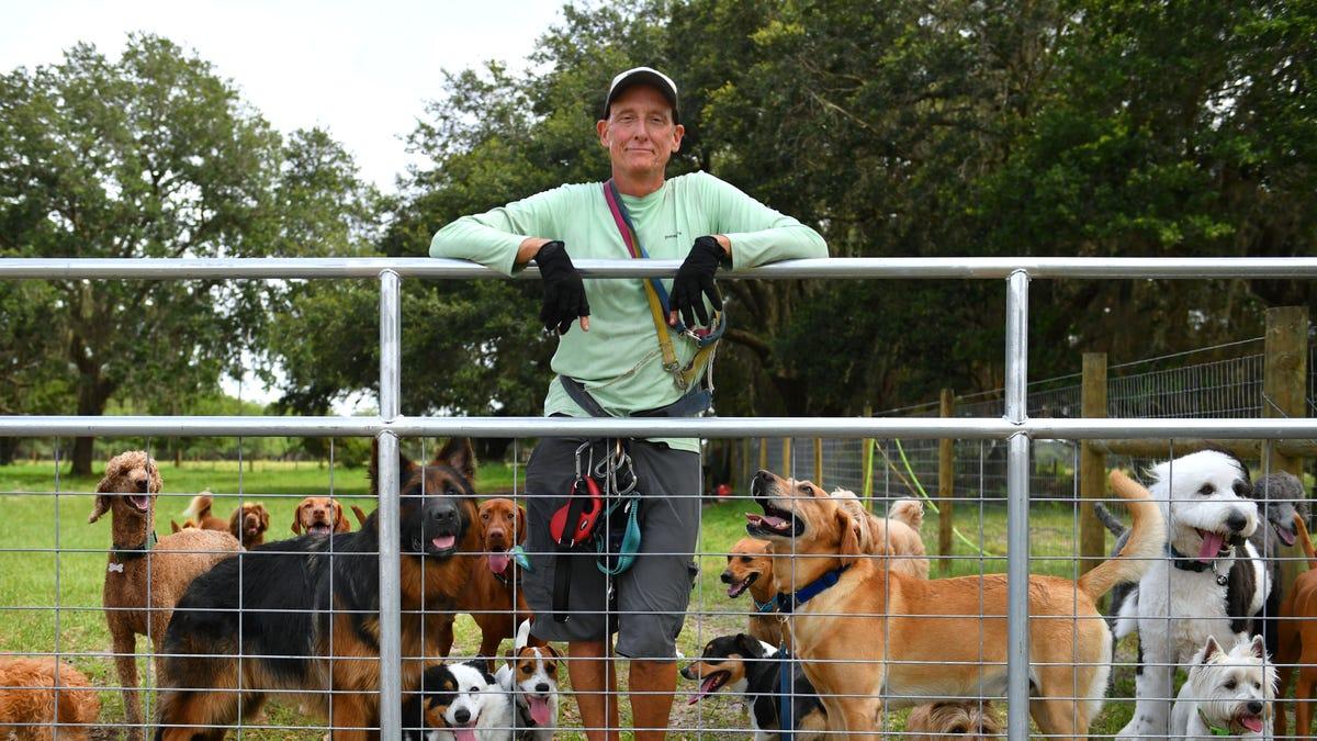 Sarasota-Manatee pet care businesses 'bark' back post-pandemic