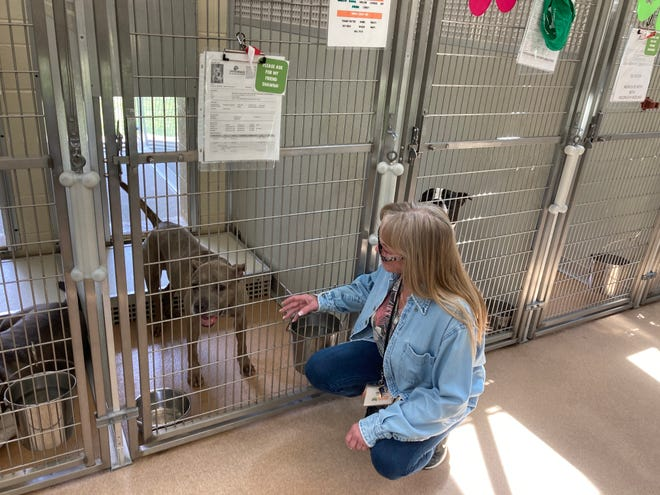 Val Miller, clinic manager at Homeward Bound Animal Shelter, says hello to Juno, who's available for adoption.
