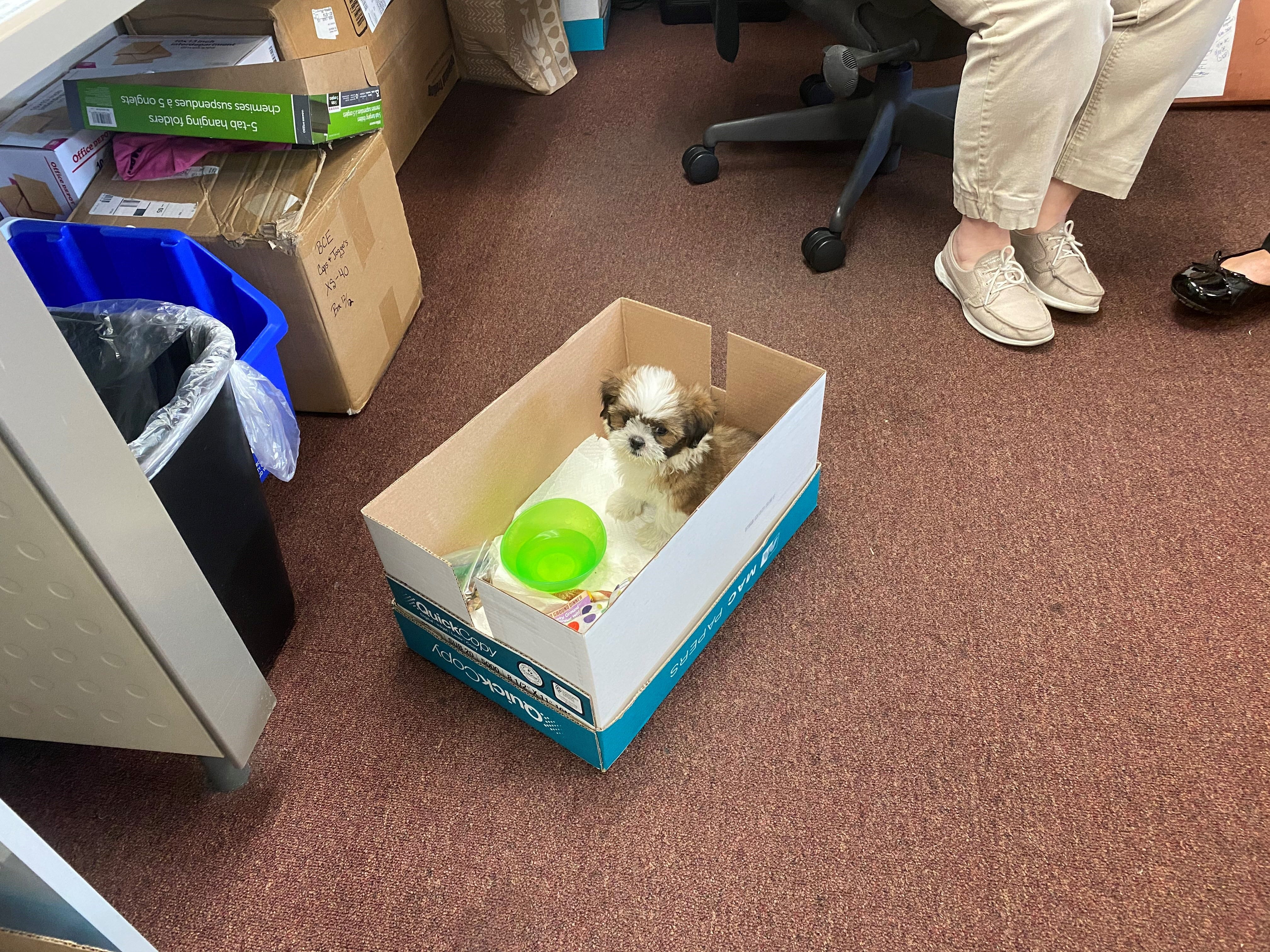 The pooch is back! $3,700 Shih Tzu puppy stolen from Fort Myers pet store recovered 3