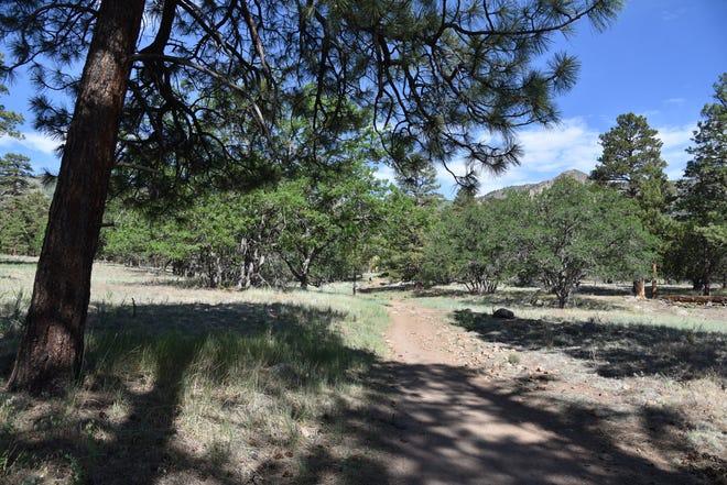 The Sandy Seep Trail below the east slopes of Mount Elden in Flagstaff.