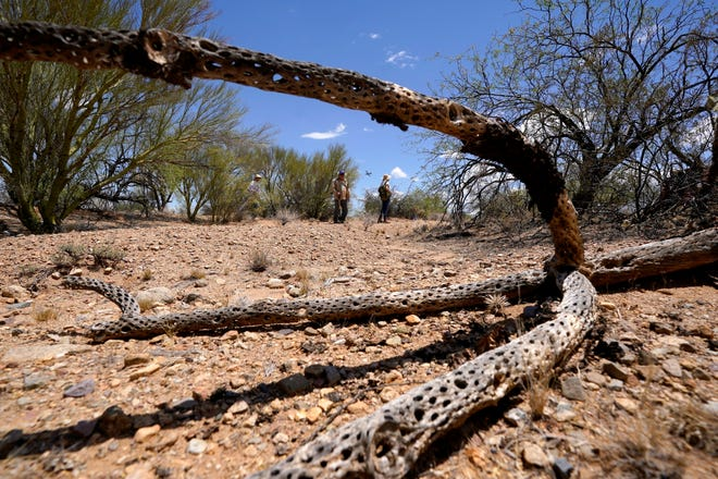 Desierto de Sonora cerca de tres puntos en Arizona.