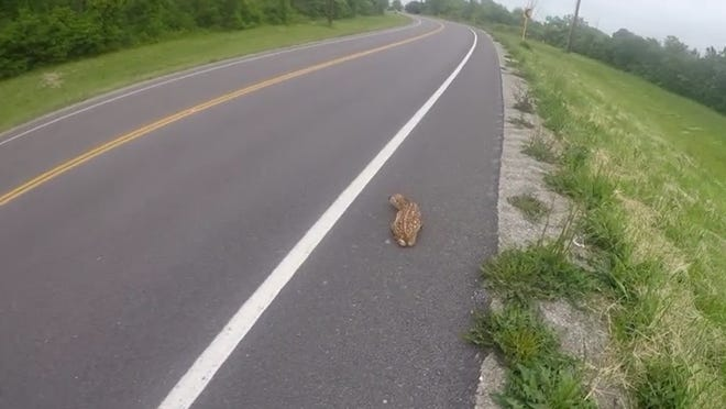 Deputy Marc Nye, of the Ottawa County Sheriff's Office, found a very young deer sitting along side of State Road, just east of Gill Road, seemingly unable to cross in the direction its mother was heading.