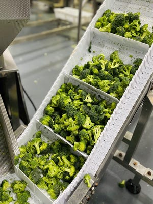 Broccoli at the DNO Produce facility on the East Side