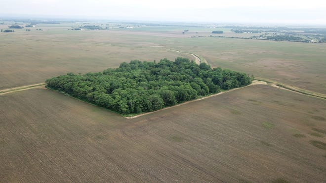 A stand of trees remains in the middle of Madison County farmland owned by Microsoft founder Bill Gates that might become part of a solar farm. Nearby Delaware County, however, is looking to take advantage of a new Ohio law to limit solar projects.