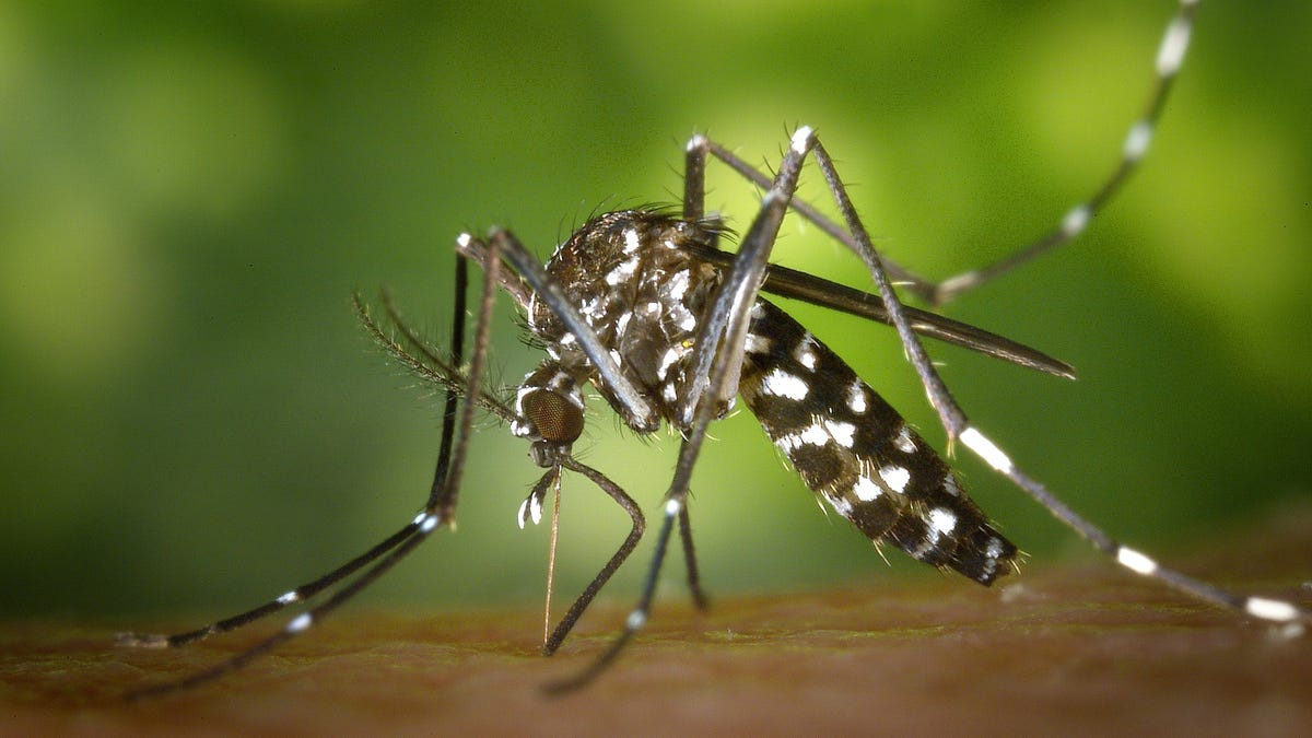 Good news: Drought means fewer annoying mosquitoes. Bad news: Drought often means more West Nile virus, not less.