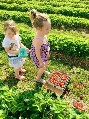 Vogel's Berry Farm opens Saturday. Hours are 9 a.m.-5 p.m. daily.