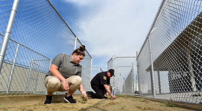 Kelsey Uhl,  a student at Siena Heights University in Adrian, is participating in a criminal justice program. Here, she is helping Monroe County Animal Director Brett Raymo clean up a few small weeds in one of the six new dog runs that are 8 x 32 feet long. The dog runs are to be named in the memory of Darrian Young, the animal control officer killed in a car crash last year.