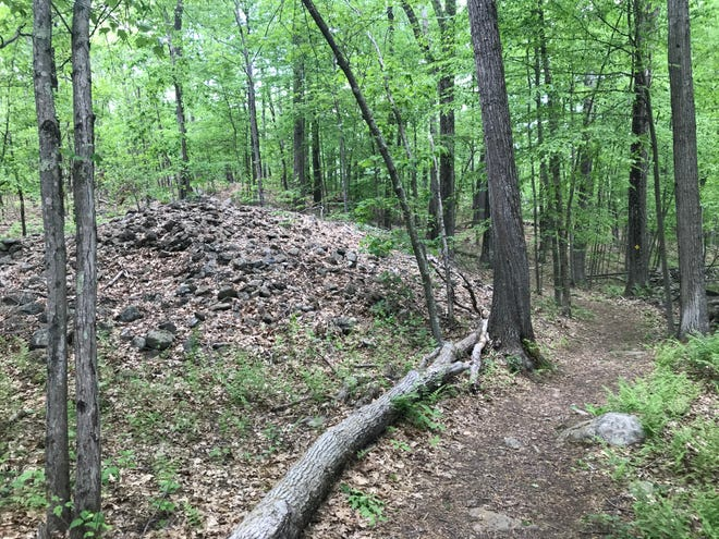 Piles of small stones that farmers cleared from the fields include specimens of Cumberlandite, the office state rock of Rhode Island, at the Blackall/Ballou Preserve.