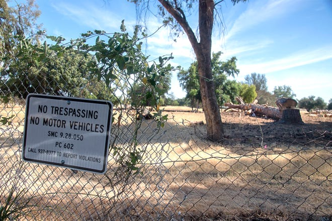 There are many trees that have been cut down but not hauled away at the former Van Buskirk golf course in south Stockton.