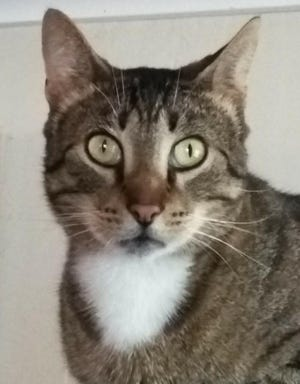 Egyptian Mau cat Malachi was reunited with his family last week after going missing in the days following Hurricane Michael in 2018.