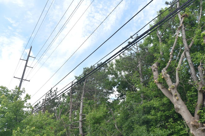 Trees have been hacked back from power lines along Ann Arbor Road in Plymouth Township near Pioneer Middle School.
