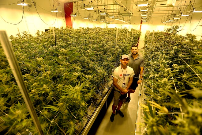 Co-founders and co-owners James Folan III and Dana Brearley are seen in the East Coast Cannabis growing facility with more than 450 marijuana plants, Thursday, June 10, 2021 in Eliot, Maine.