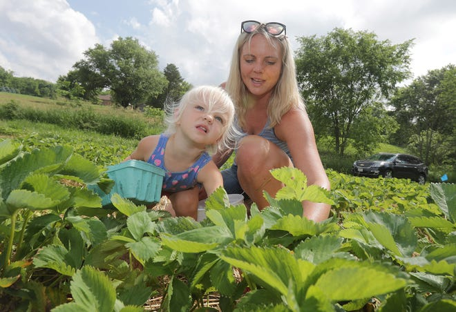 Hazel Jakubowski, 2, helps her mother, Courtney, pick strawberries at Sunny Slope Orchards in Tuscarawas Township.